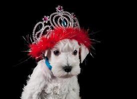 grappige puppy foto