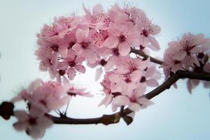 mooie bloei foto