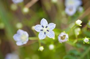 wazig bloemen achtergrond foto