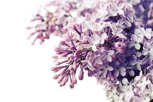 lente bloemen