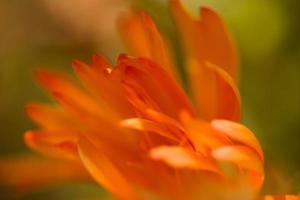 oranje bloemblaadjes in een briesje foto