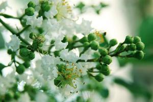 bloemen achtergrond foto