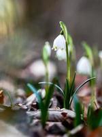 gemeenschappelijke sneeuwvlok foto