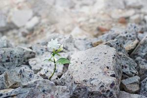 witte bloem groeit op scheuren ruïnes gebouw, hoop en geloof foto
