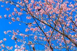Witkopbulbul vogel op takje sakura foto