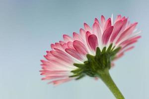 bloemen abstracte achtergrond foto