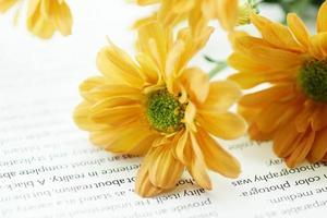 oranje chrysant op boek