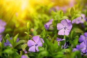 blauwe bloemen in een bos foto