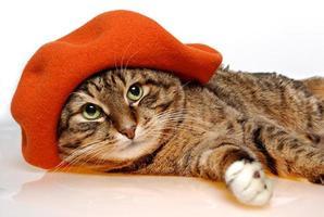 kat met oranje baret foto