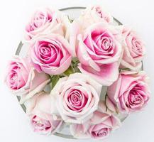 wit en roze roos foto