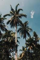 kokospalmen in de zon foto