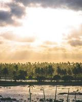 kokos- en palmbomen foto