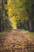 weg traject in een park