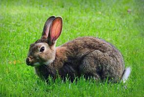 konijn zittend op het gras