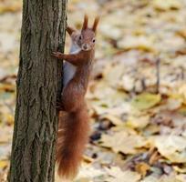 eekhoorn op een boomstam