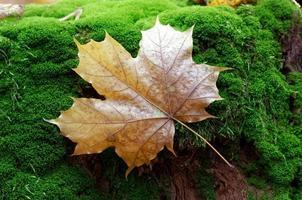 gevallen blad op mos
