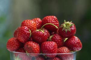 kom met verse biologische aardbeien in de zomertuin