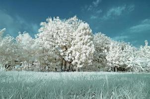 gebied van infrarood foto