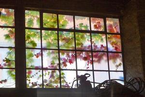 oud raam in harmonische kleuren met klimop foto