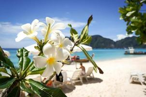 plumeria bloem op tropisch strand achtergrond foto