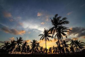 palmbomen bij zonsondergang. foto