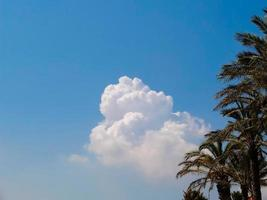 wolken en palmbomen foto