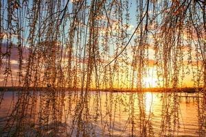 osier bij de rivier en prachtige zonsondergang