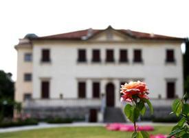 prachtige bloeiende rozen in de tuin van een historische Venetiaan