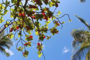 palmbomen en Bengaalse amandelbladeren tegen blauwe hemel