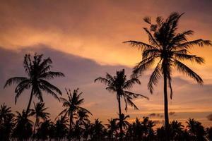 palmbomen op mooie zonsondergangtijd foto