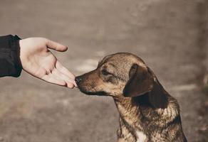 kinderhand en eenzame dakloze hond foto