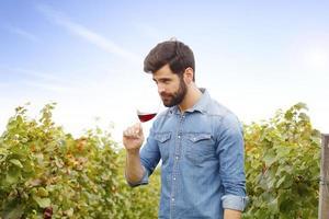 werken bij wijngaard foto