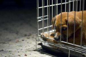 triest puppy in kooi foto