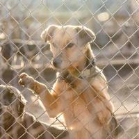 hond in asiel foto