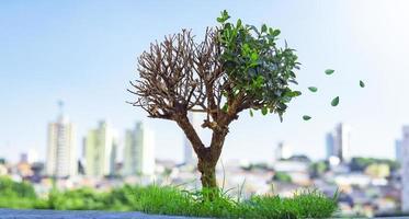 bonsaiboom die bladeren verliest foto