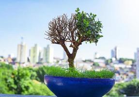 bonsaiboom groeit in stedelijke stad foto