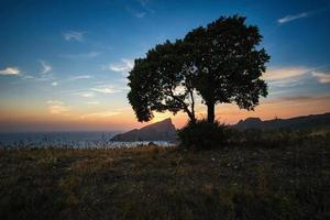 silhouet foto van de boom