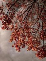 bruine bladeren op een herfstdag foto