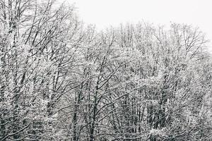 kale bomen bedekt met sneeuw