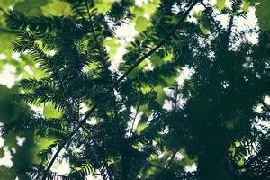 selectieve aandacht close-up van de boom foto