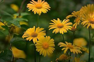 gele bloemen in een tuin