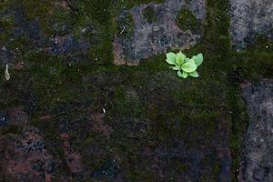 groen mos op de buitenmuur foto