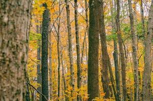 schilderachtig uitzicht op de herfstbomen foto