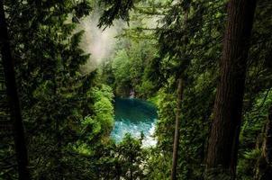 waterlichaam in een bos foto