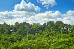 regenwoud met blauwe lucht