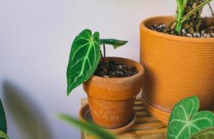 close-up van potplanten foto