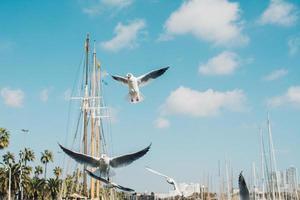 vliegende zeemeeuwen onder een blauwe hemel