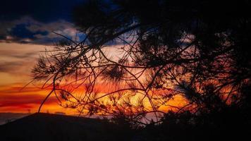 silhouet van de boom tijdens gouden uur