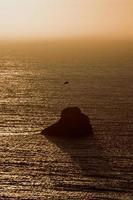 zeemeeuw die over de oceaan vliegt foto