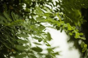 boomtak met groene bladeren rond foto